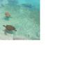 海の側でスイスイ泳ぐ亀たち